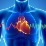 Vad som verkligen ger hjärtsjukdom