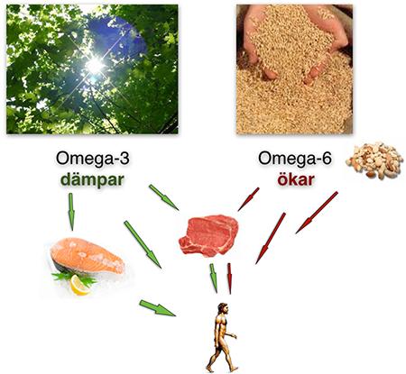 Valnøtter omega 3