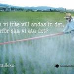 Vindruvor, potatis, kaffe, mjölk, bananer och kött ska vara ekologiskt